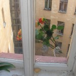 Unusual flower delivery by RussianFlora.com