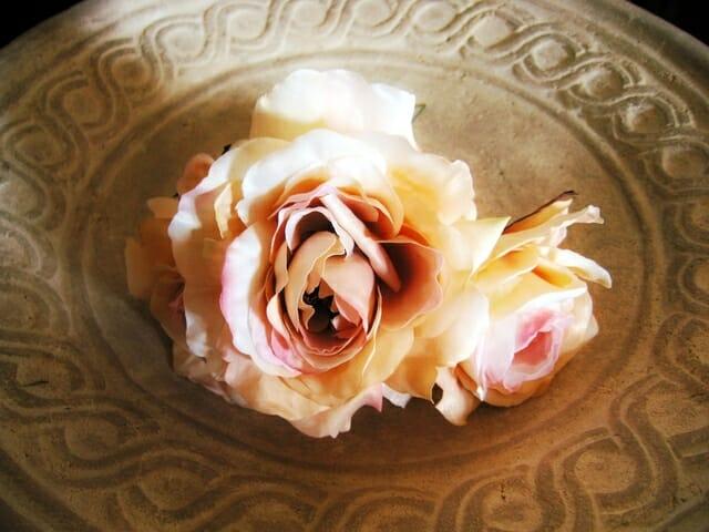 white-rose-1518370-640x480