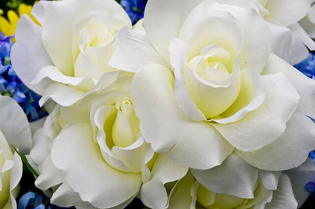 White Flowers for Rosh Hashanah - Roses