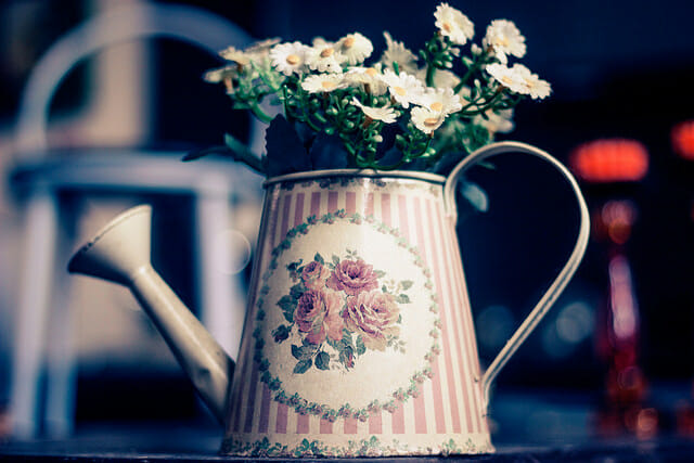 Potted plants allow more than winter flowers to grow indoors
