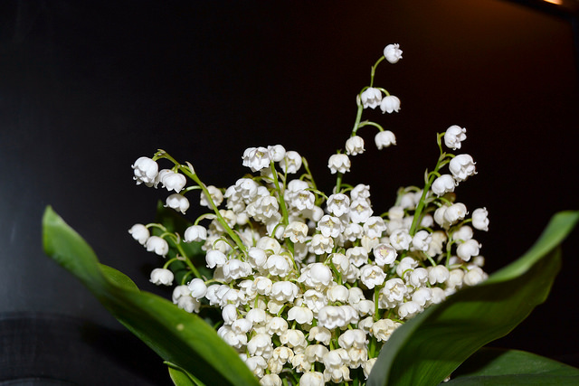 The Birth Flower For May - Lily of the Valley