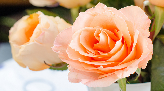 Roses - the birth flower for June