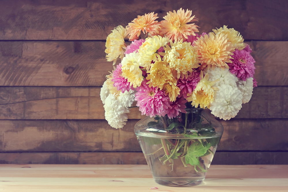 Flower Meanings in China Chrysanthemums for Fall
