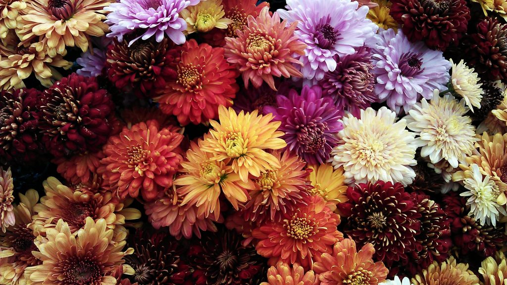 Symbolic Flower Meanings in China - Russian Flora Blog ...