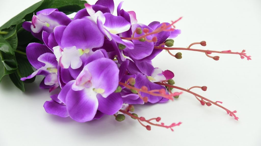Flower Meanings in China_Orchids for Friendship