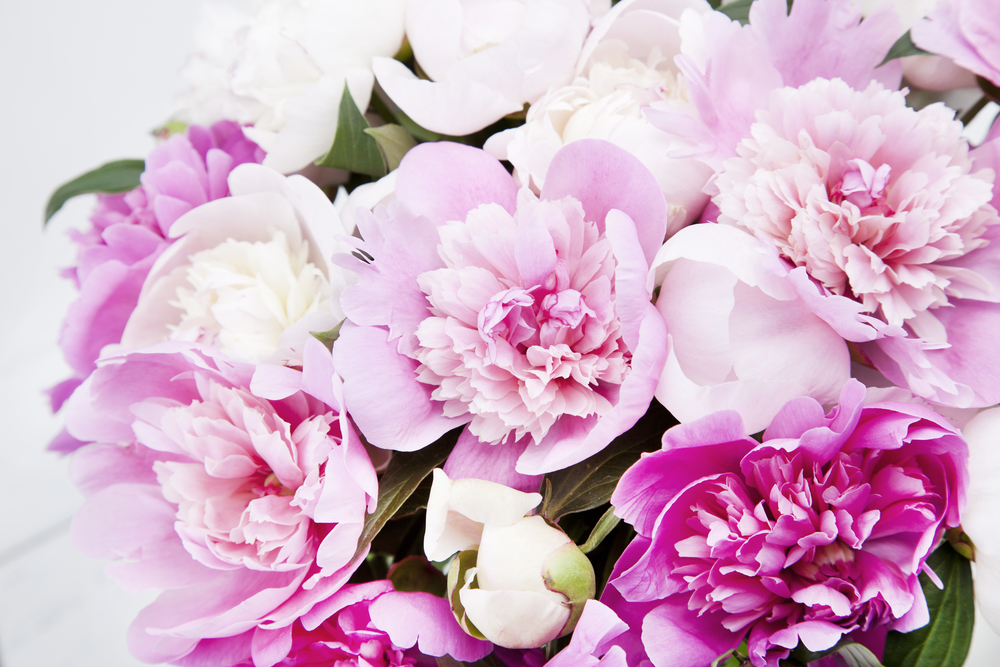 Beautiful bouquet of pink and white peonies - A Guide To International Women's Day