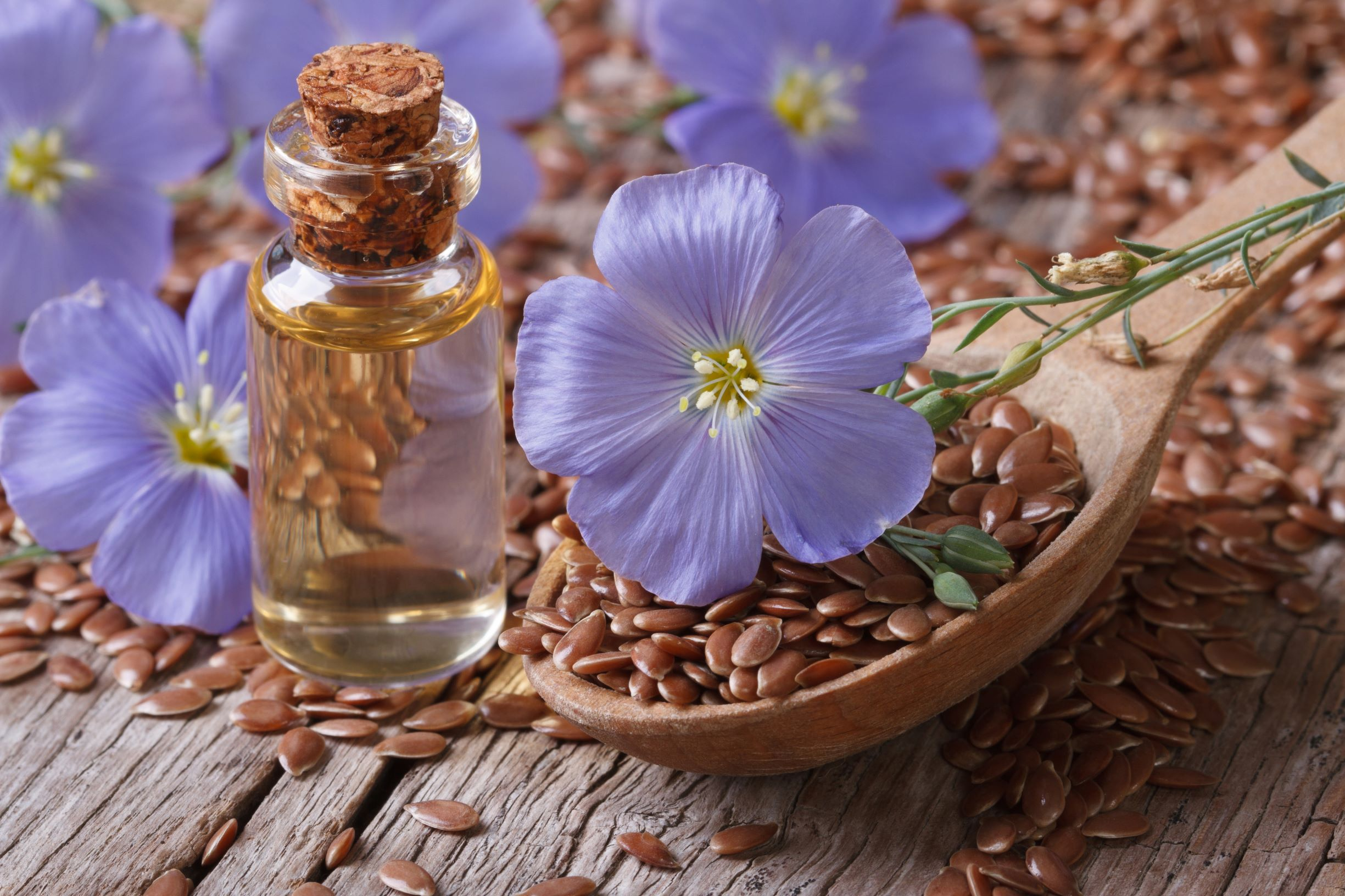 The National Flower of Belarus: Flax - Russian Flora Blog ...