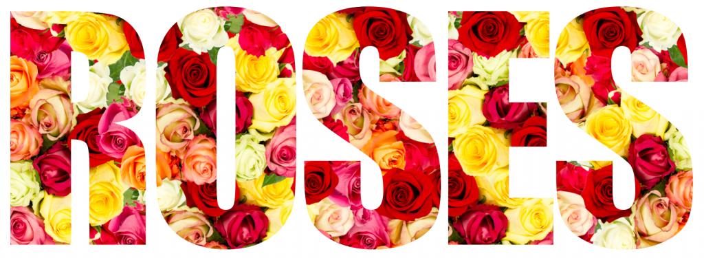 RF_Blog_Roses
